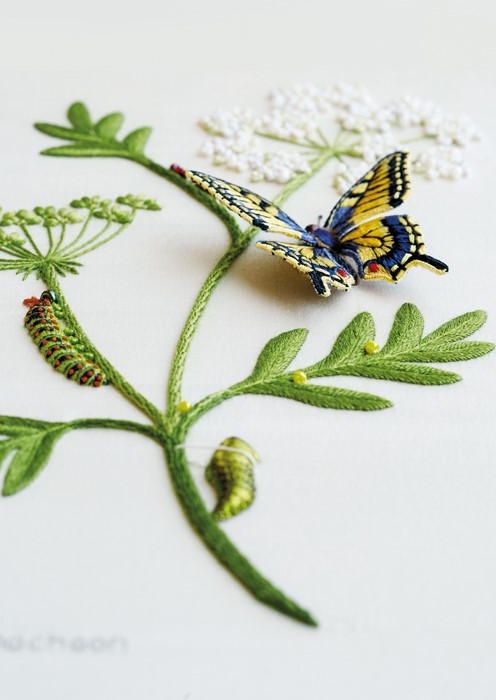 Life Cycle of the Swallowtail Butterfly - i100 Kit